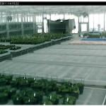cctv-tulip-cam